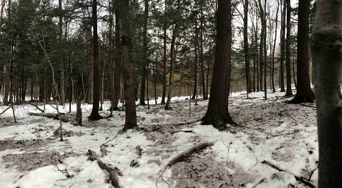 A view of the woods when learning how to hunt on a watch