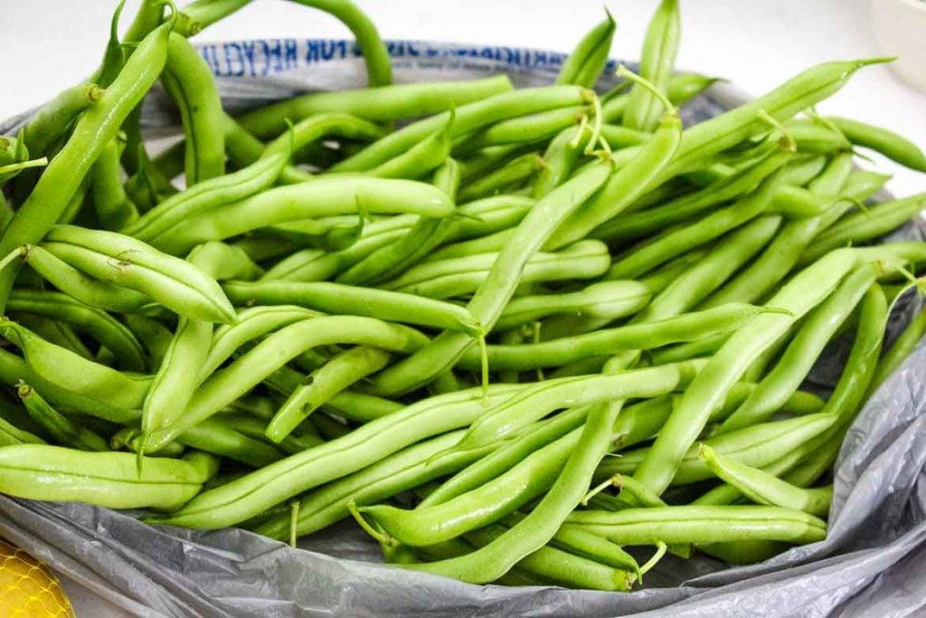 Garden fresh picked beans